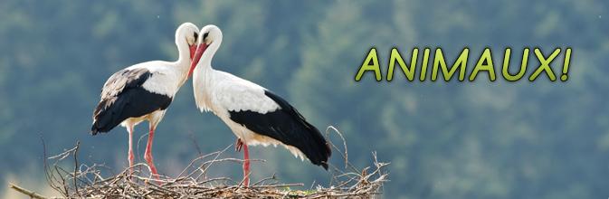 Stork nest live