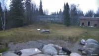 Cochrane - Cochrane Polar Bear Habitat - Niedźwiedzie polarne