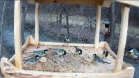Kulaszne - Bird feeder