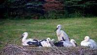 Makov - Bird feeder