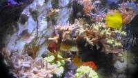 Sundsvall - Akwarium morskie