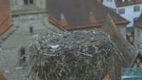 Dinkelsbühl - Storks