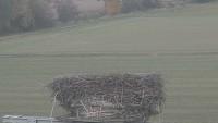 Münster - Cigüeñas