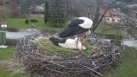 Tyrawa Wołoska - Storks