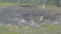 Puszcza Białowieska - Żubry