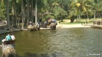 Bali - Elephant Safari Park
