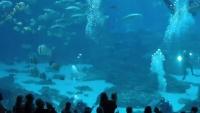 Atlanta - Georgia Aquarium
