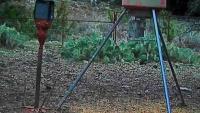 Roswell - jelenie