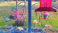 Winston - Hummingbirds