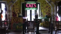 New Orleans - Cats Meow
