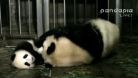 Chengdu - Research Base of Giant Panda Breeding