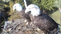 Sanibel Island - Osprey