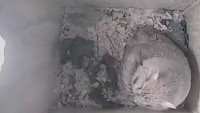 Murrysville - Owls