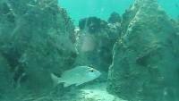 Cooper Island - Reef, Seagrass