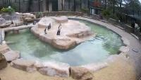 Hayle - Paradise Park - Penguins