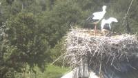 Murimoos - Storks