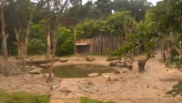 Amersfoort - Rhinoceros
