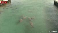 Riviera Beach - Manaty