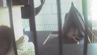 Essen - Rats