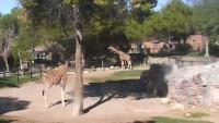 Tucson - Reid Park Zoo