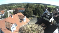 Aulendorf - storks