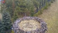 Strzelce - Storks