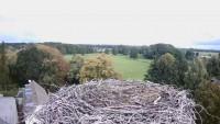 Altlandsberg - Storks