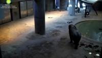 National Zoological Park - Drambliai