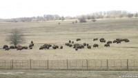Wilmington - Midewin National Tallgrass Prairie