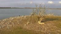 Wasservogelreservat Wallnau - Cormorans