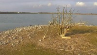 Wasservogelreservat Wallnau - kormorany