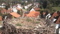 Bad Waldsee - storks