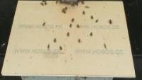 Würzburg - Pszczoły