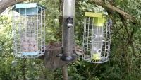 Frome - Simon King Wildlife - Bird feeder