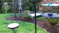 Dumfries - Bird feeder