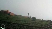 Tenerife - Bodegas Monje