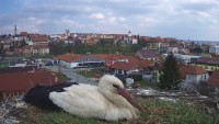 Uherský Brod - Störche