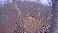 Hanover - Bald Eagle Nest