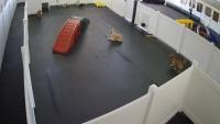 Jacksonville - Happy Hound Dog Resorts