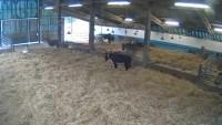 Sidmouth - The Donkey Sanctuary - Osły