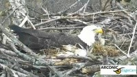 Davenport - Eagles