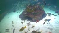 Marathon - Florida Keys Aquarium Encounters