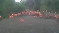 Chester Zoo - Flamingo