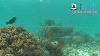 Wielki Kajman - Compass Point Cayman Lagoon - Rafa koralowa