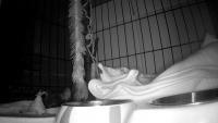 Ryga - Kitten foster home