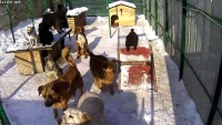 Plavna - Schronisko dla psów Lesi