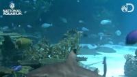 Baltimore - National Aquarium - Blacktip Reef