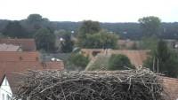 Bornheim - storks