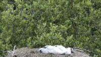 Earnewâld - De Alde Feanen - Storks
