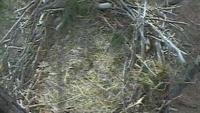 Blackwater Refuge - orle gniazdo